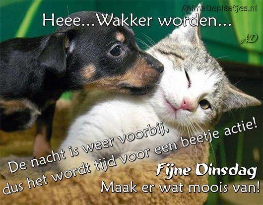 fijne-dinsdag-animatieplaatjes.nl-kat-in-mand-en-hond.jpg