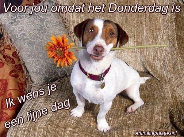 fijne donderdag hond met bloem