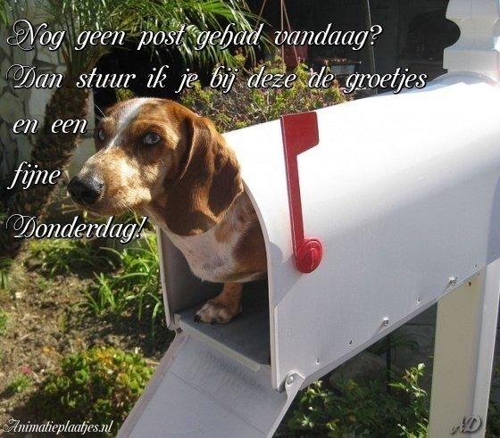 fijne donderdag hond in brievenbus