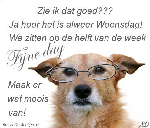 hond met bril op